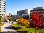 多伦多约克大学专业和介绍
