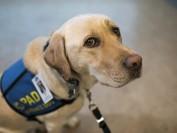 帮助受虐孩子 安慰犬首次在加拿大海洋省持证上岗