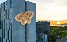 温哥华UBC英属哥伦比亚大学