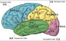 汪丁丁:应试教育为何摧残人脑
