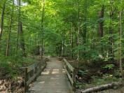 多伦多市内最美森林公园  徒步旅行的好去处