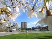 加拿大安省21所大学名单