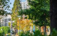 温哥华UBC不列颠哥伦比亚大学
