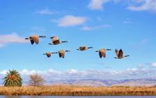 夏天来了,加拿大移民家庭候鸟爸妈们迁徙的季节又到了