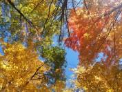 多伦多市内的10个宝藏公园!在山水间,观赏最美的枫叶秋景!