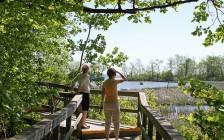 大多伦多地区唯一的湿地公园,密西沙加这里的秋景美惨了!