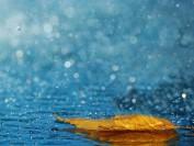 别在温哥华的雨季忧伤,人间不值得