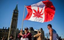 10月17日加拿大休闲类大麻合法化 大麻市场规模预计一年达到50亿