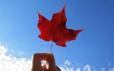 加拿大大学的CO-OP(带薪实习)项目深度解读