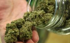 大多伦多地区公立教育局或出新规定:拥有大麻的公校学生罚停学售卖者开除