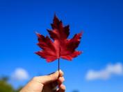 来加拿大留学生总数突破50万 中国留学生最多 移民梦难圆