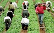 加拿大严重缺乏这些劳工 低技能移民未来有希望