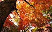 哈佛大学秋季将不允许国际新生进校园,留学生可在本国大学上课