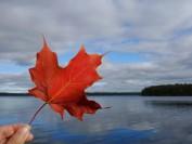 加拿大经验类移民计划成功 国际留学生经济表现不俗