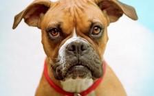 难道国内留学公司员工的责任心被狗吃了?