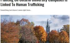 警惕!加拿大多间大学现神秘招聘广告!