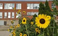 加拿大华裔移民 体验私立学校甘与苦