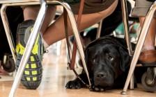 带着小狗去上学!安省将允许学生携带服务犬