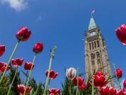 加拿大签证如果到期 最晚要在今年12月底以前申请续签