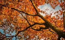 多伦多十大赏秋季枫胜地  探索城市最美时光