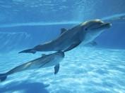 加拿大或禁止圈养鲸鱼海豚