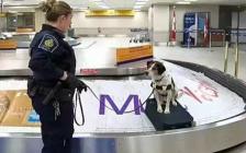入境加拿大海关检查注意事项