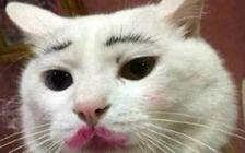 给猫咪画了个妆,在美国读书的一个中国留学生可能就要被遣返回国!