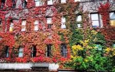 加拿大10大全球最佳大学排名推荐