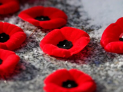 今年的11月11日,是加拿大的第一百个国殇纪念日Remembrance Day