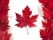 重磅:加拿大八大名校对持中国高中毕业证书的学生录取标准对比